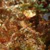 秋の浜のヒメテグリ